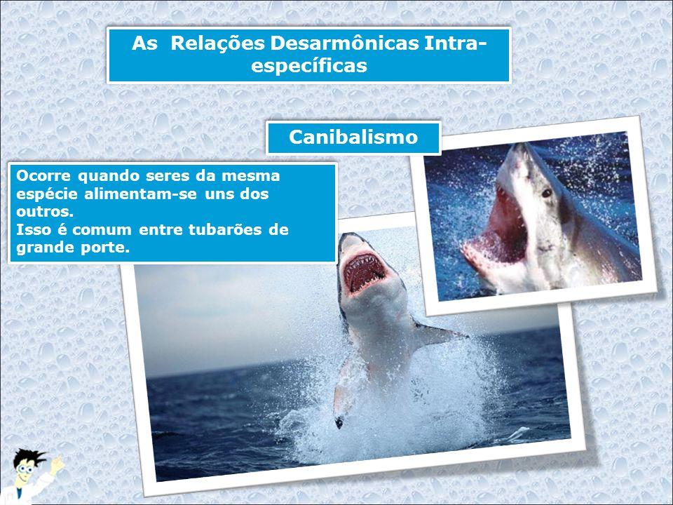 As Relações Desarmônicas Intra- específicas Ocorre quando seres da mesma espécie alimentam-se uns dos outros. Isso é comum entre tubarões de grande po