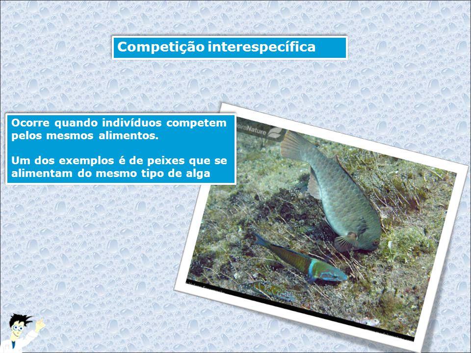 Ocorre quando indivíduos competem pelos mesmos alimentos. Um dos exemplos é de peixes que se alimentam do mesmo tipo de alga Ocorre quando indivíduos