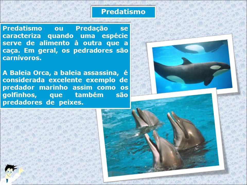 Predatismo Predatismo ou Predação se caracteriza quando uma espécie serve de alimento à outra que a caça. Em geral, os pedradores são carnívoros. A Ba