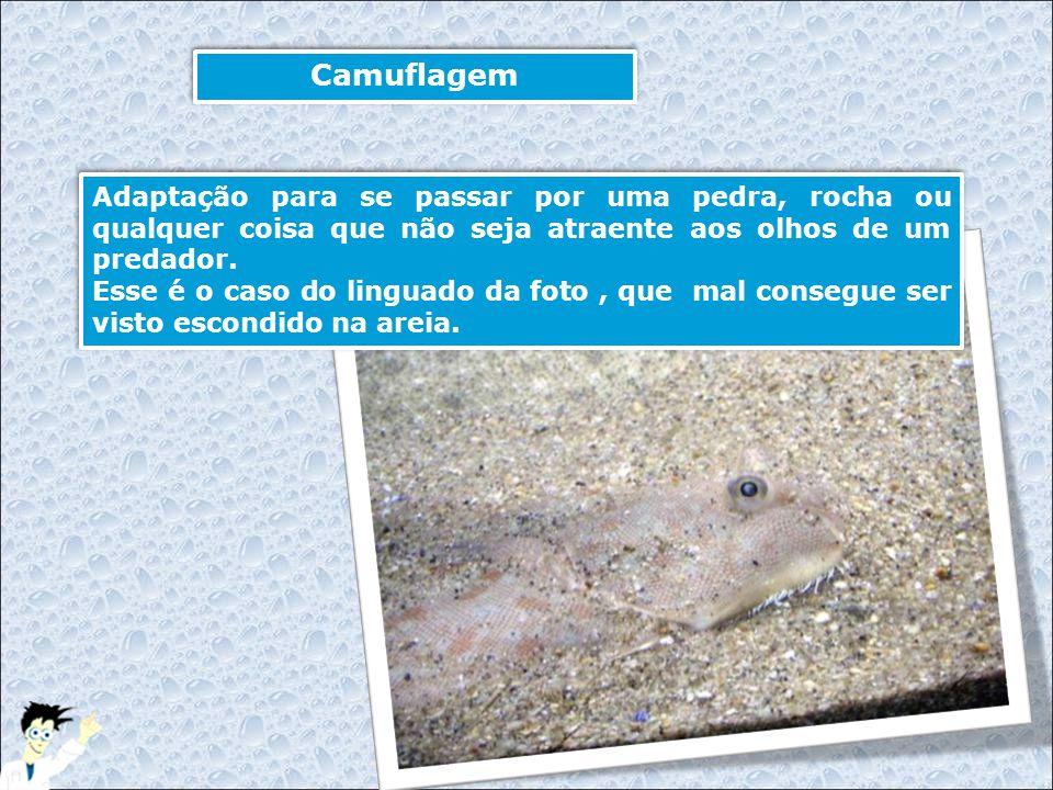 Camuflagem Adaptação para se passar por uma pedra, rocha ou qualquer coisa que não seja atraente aos olhos de um predador. Esse é o caso do linguado d