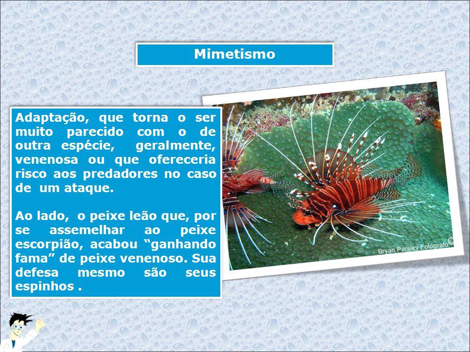 Mimetismo Adaptação, que torna o ser muito parecido com o de outra espécie, geralmente, venenosa ou que ofereceria risco aos predadores no caso de um