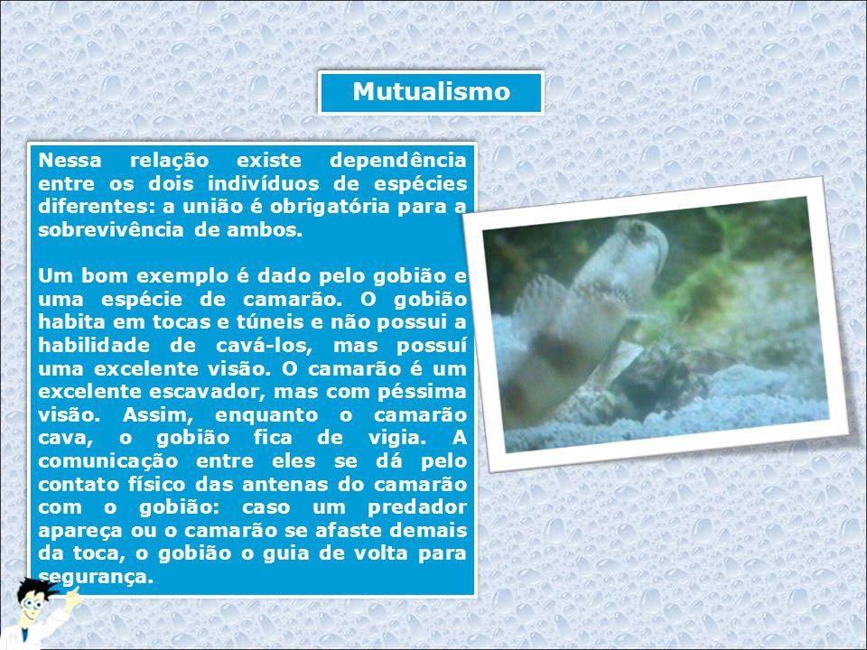 Referências Consultadas  http://it.wikipedia.org  http://www.ipag.org.br  http://www.ambientebrasil.com.br  http://www.mesologia.hpg.ig.com.br/relacoes.htm  http://www.naturlink.pt  http://pt.wikipedia.org/  Aventura visual, editora globo, fascículo e vídeo peixes