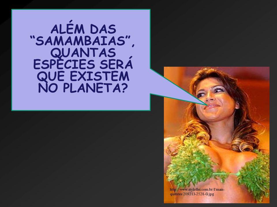 http://www.stylofm.com.br/f/mais- quentes/209213-2528-G.jpg ALÉM DAS SAMAMBAIAS , QUANTAS ESPÉCIES SERÁ QUE EXISTEM NO PLANETA