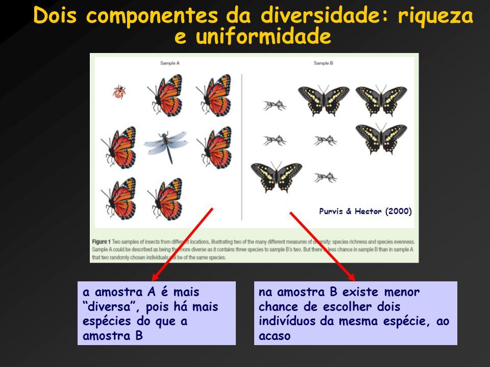 Dois componentes da diversidade: riqueza e uniformidade a amostra A é mais diversa , pois há mais espécies do que a amostra B na amostra B existe menor chance de escolher dois indivíduos da mesma espécie, ao acaso Purvis & Hector (2000)