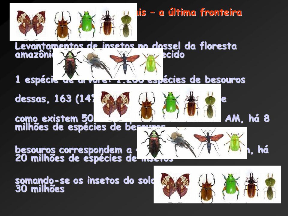 Exemplo: florestas tropicais – a última fronteira (Erwin, 1988) Levantamentos de insetos no dossel da floresta amazônica: um local pouco conhecido 1 espécie de árvore: 1.200 espécies de besouros dessas, 163 (14%) só ocorriam nessa espécie como existem 50.000 espécies de árvore na AM, há 8 milhões de espécies de besouros besouros correspondem a 40% dos insetos e assim, há 20 milhões de espécies de insetos somando-se os insetos do solo, esse número chega a 30 milhões