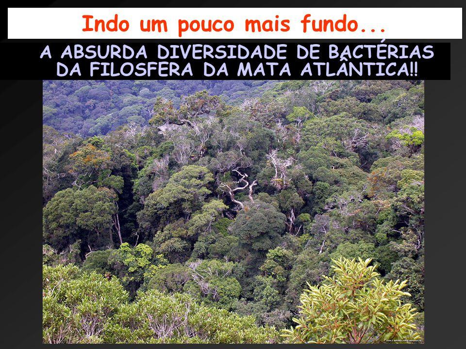 Science, 2006 Estima-se em 2 a 13 milhões de novas espécies de bactérias na filosfera da mata Atlântica!!!