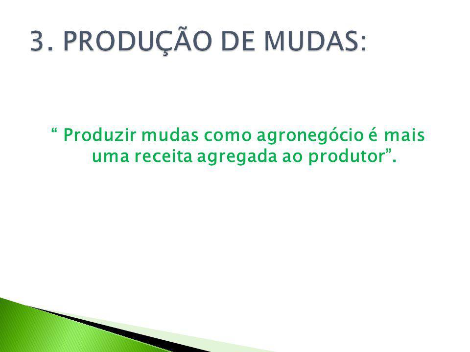Produzir mudas como agronegócio é mais uma receita agregada ao produtor .