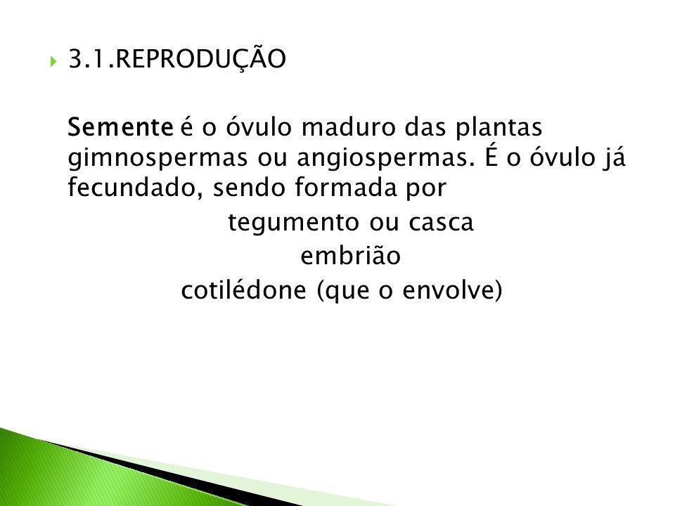  3.1.REPRODUÇÃO Semente é o óvulo maduro das plantas gimnospermas ou angiospermas.