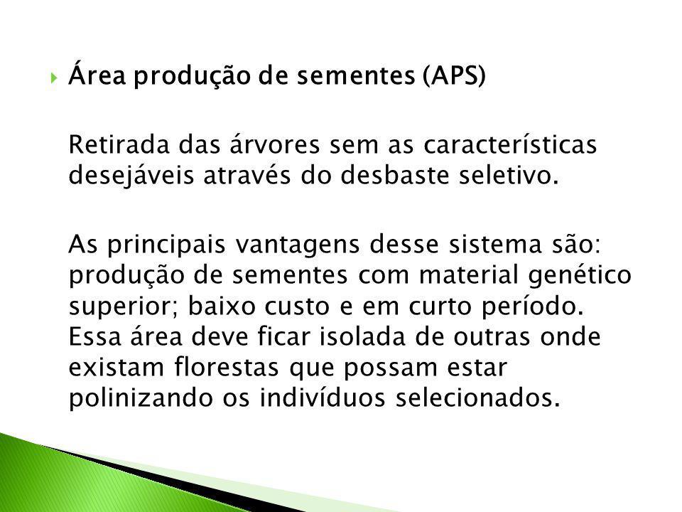  Área produção de sementes (APS) Retirada das árvores sem as características desejáveis através do desbaste seletivo.