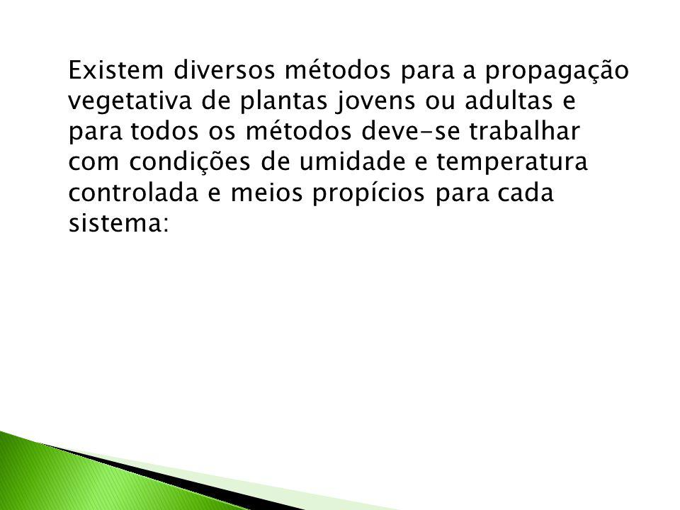 Existem diversos métodos para a propagação vegetativa de plantas jovens ou adultas e para todos os métodos deve-se trabalhar com condições de umidade e temperatura controlada e meios propícios para cada sistema: