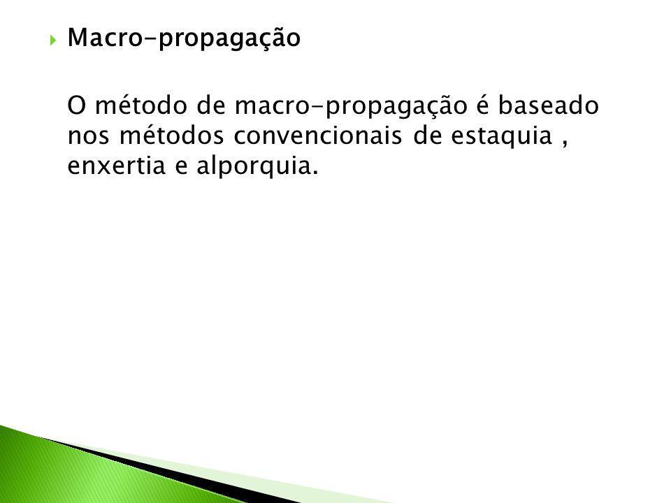  Macro-propagação O método de macro-propagação é baseado nos métodos convencionais de estaquia, enxertia e alporquia.