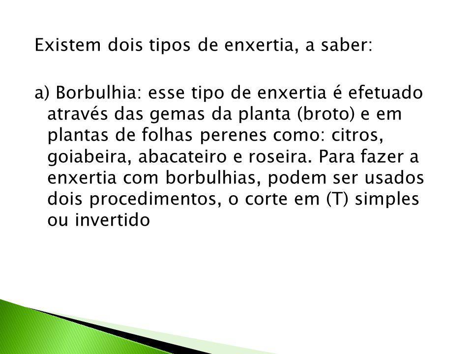 Existem dois tipos de enxertia, a saber: a) Borbulhia: esse tipo de enxertia é efetuado através das gemas da planta (broto) e em plantas de folhas perenes como: citros, goiabeira, abacateiro e roseira.