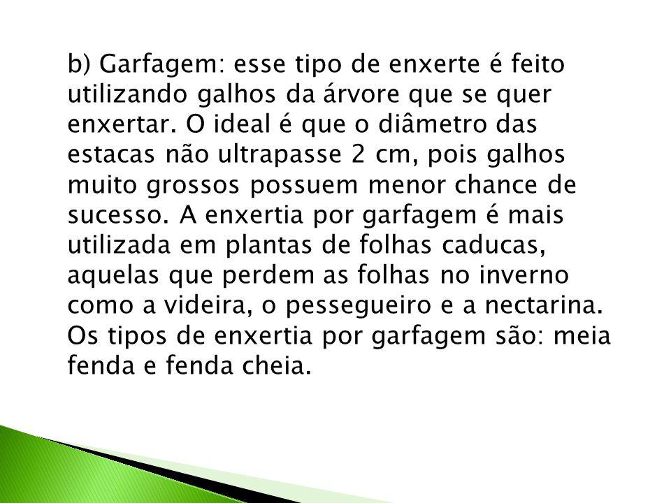 b) Garfagem: esse tipo de enxerte é feito utilizando galhos da árvore que se quer enxertar.