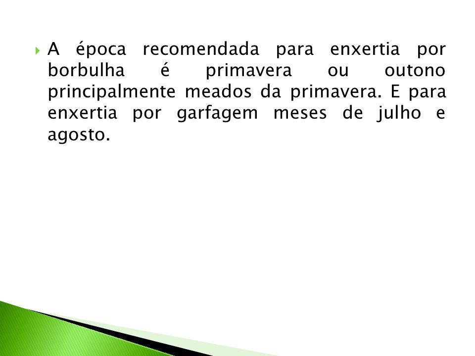  A época recomendada para enxertia por borbulha é primavera ou outono principalmente meados da primavera.