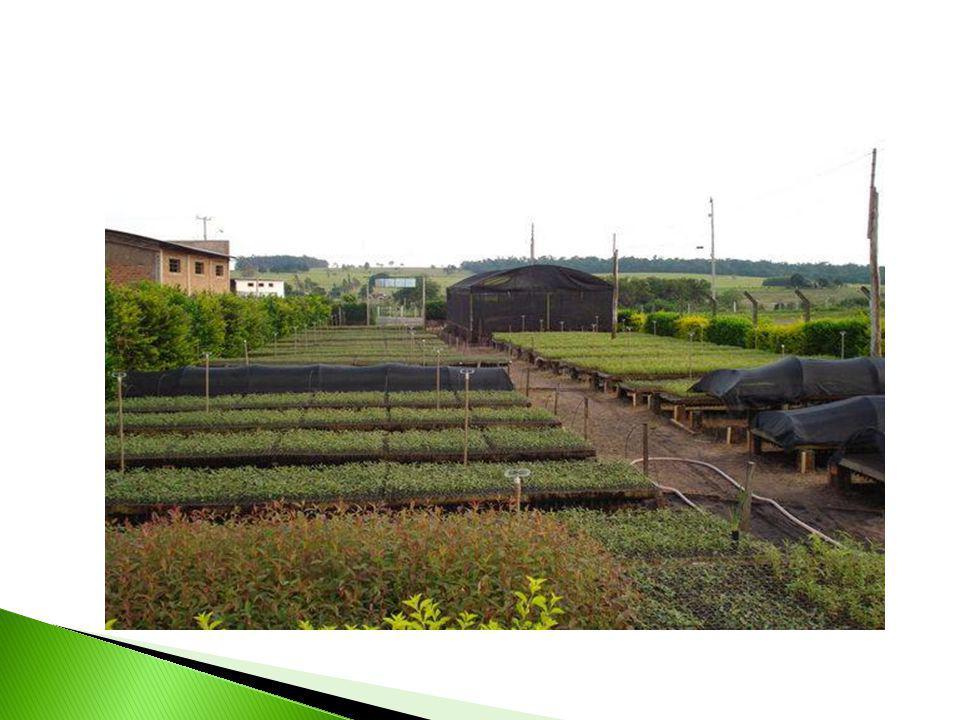 - Formação de mudas: quebra de dormência de sementes, tipos de substratos e recipientes; - Prática de enxertia; - Irrigação e adubação; - Visita Técnica periódica ao viveiro de mudas.