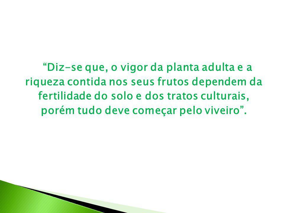 Diz-se que, o vigor da planta adulta e a riqueza contida nos seus frutos dependem da fertilidade do solo e dos tratos culturais, porém tudo deve começar pelo viveiro .