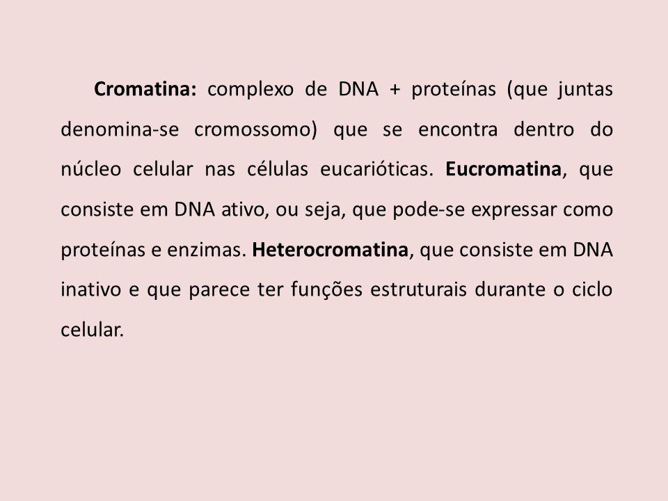 Cromatina: complexo de DNA + proteínas (que juntas denomina-se cromossomo) que se encontra dentro do núcleo celular nas células eucarióticas. Eucromat