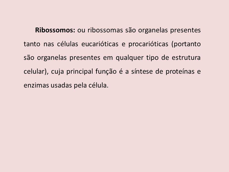 Ribossomos: ou ribossomas são organelas presentes tanto nas células eucarióticas e procarióticas (portanto são organelas presentes em qualquer tipo de