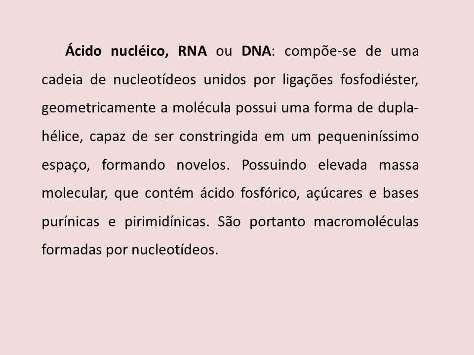 Ácido nucléico, RNA ou DNA: compõe-se de uma cadeia de nucleotídeos unidos por ligações fosfodiéster, geometricamente a molécula possui uma forma de d