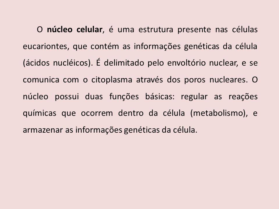 O núcleo celular, é uma estrutura presente nas células eucariontes, que contém as informações genéticas da célula (ácidos nucléicos). É delimitado pel