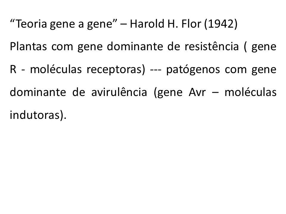 """""""Teoria gene a gene"""" – Harold H. Flor (1942) Plantas com gene dominante de resistência ( gene R - moléculas receptoras) --- patógenos com gene dominan"""