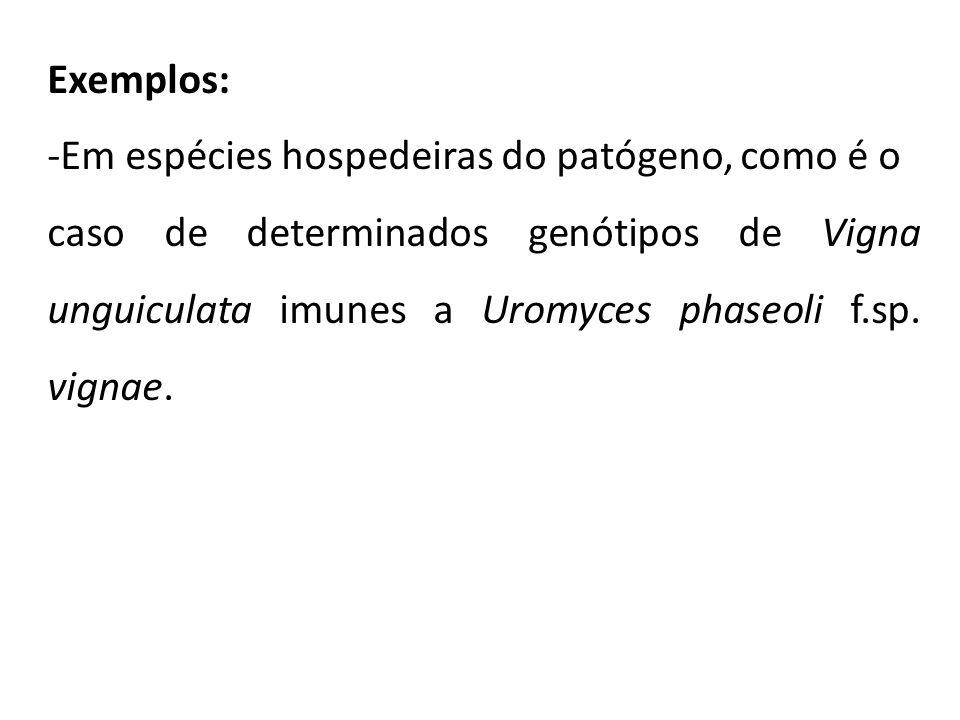 Exemplos: -Em espécies hospedeiras do patógeno, como é o caso de determinados genótipos de Vigna unguiculata imunes a Uromyces phaseoli f.sp. vignae.