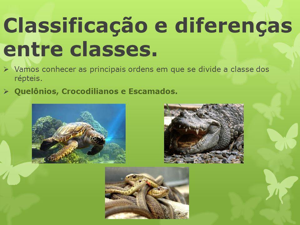 Classificação e diferenças entre classes.  Vamos conhecer as principais ordens em que se divide a classe dos répteis.  Quelônios, Crocodilianos e Es