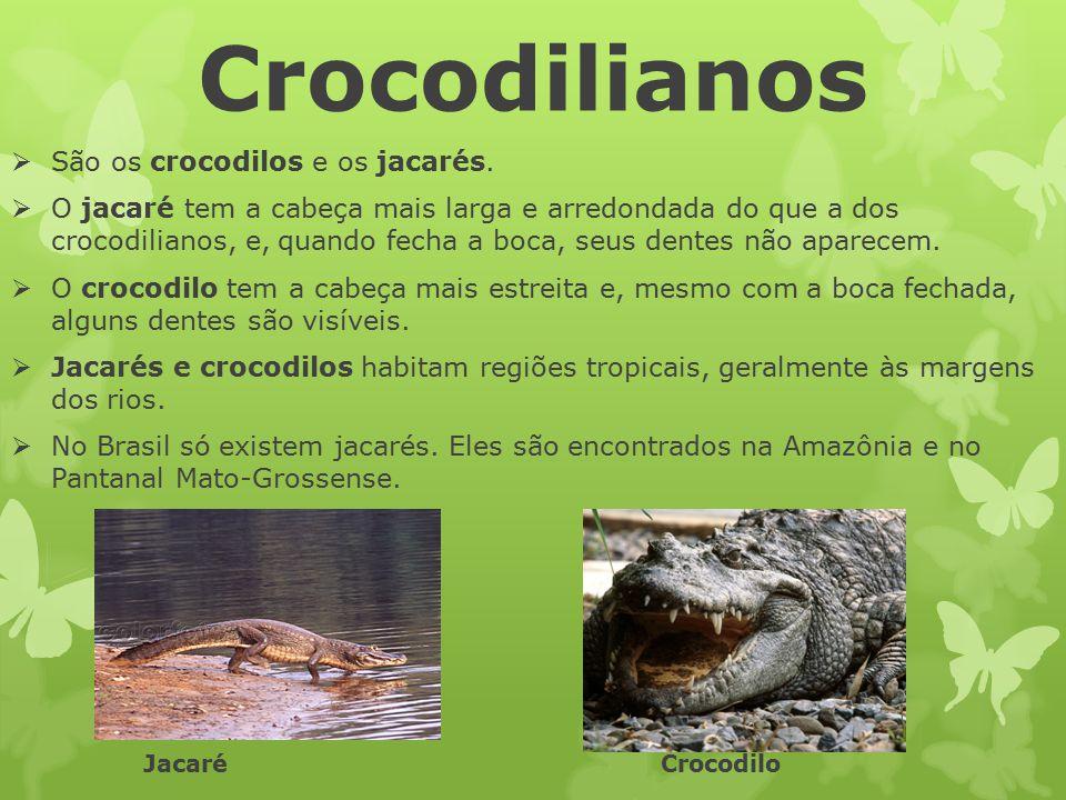 Crocodilianos  São os crocodilos e os jacarés.  O jacaré tem a cabeça mais larga e arredondada do que a dos crocodilianos, e, quando fecha a boca, s