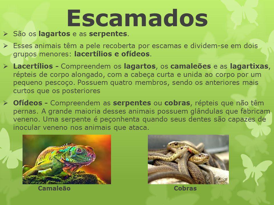 Escamados  São os lagartos e as serpentes.  Esses animais têm a pele recoberta por escamas e dividem-se em dois grupos menores: lacertílios e ofídeo