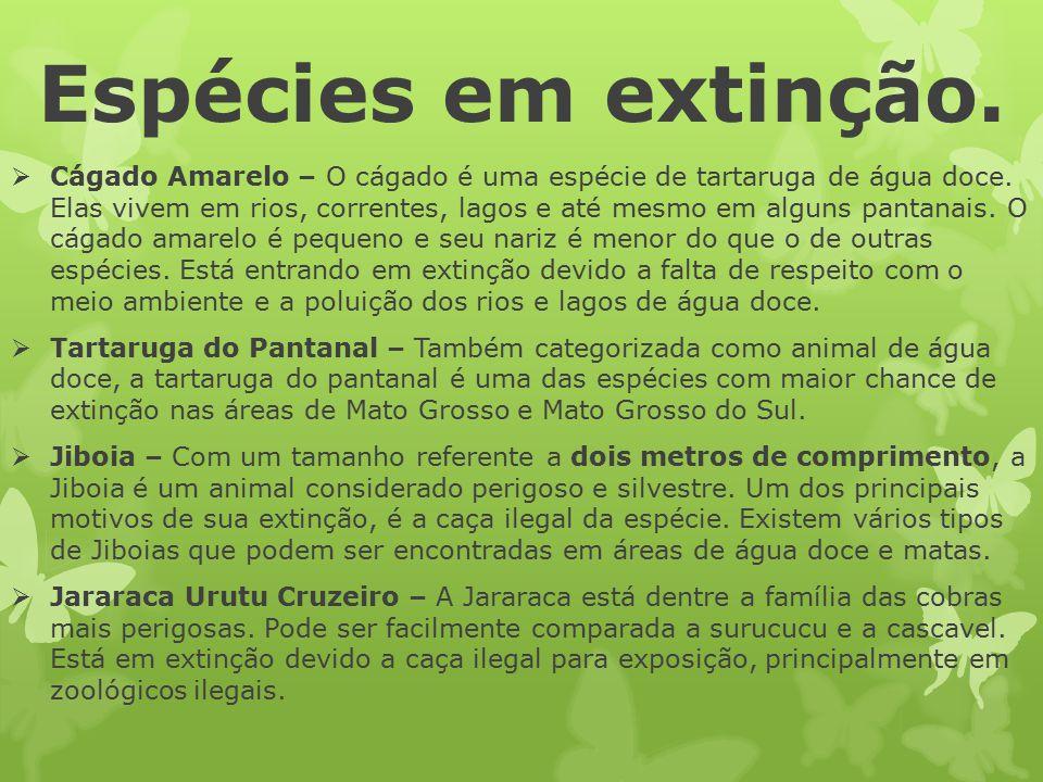 Espécies em extinção.  Cágado Amarelo – O cágado é uma espécie de tartaruga de água doce. Elas vivem em rios, correntes, lagos e até mesmo em alguns