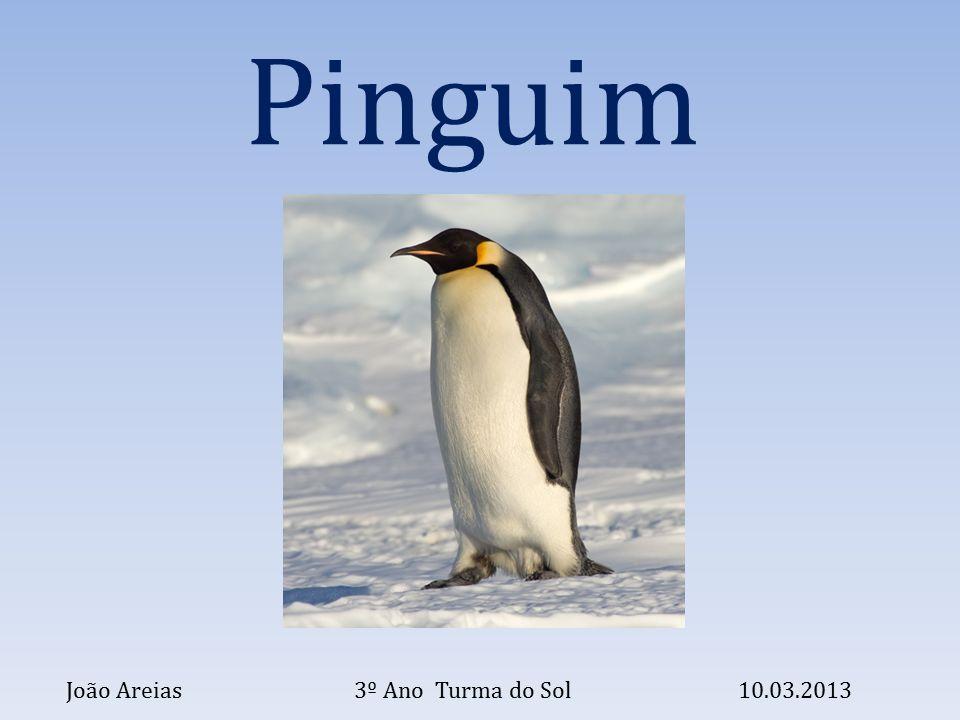 O pinguim é uma ave.