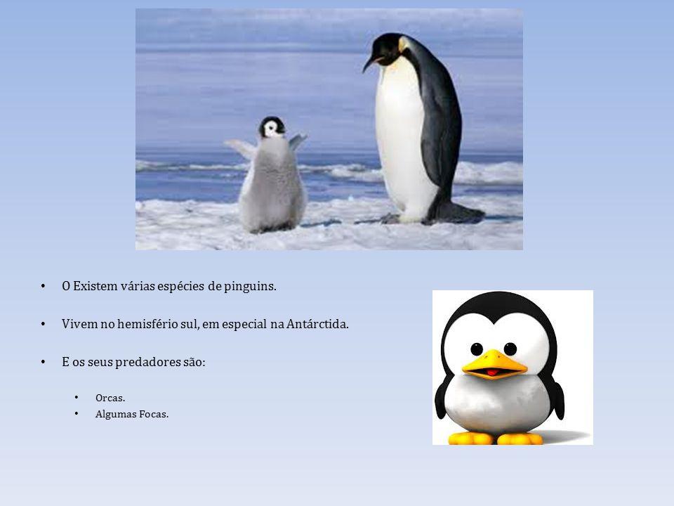 O Existem várias espécies de pinguins.Vivem no hemisfério sul, em especial na Antárctida.