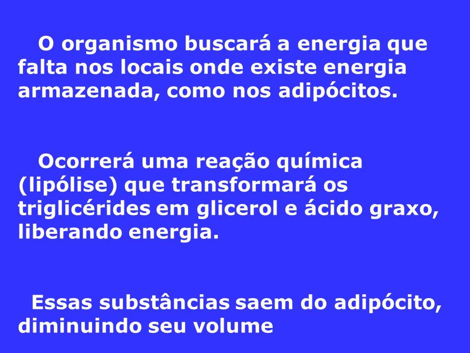 O organismo buscará a energia que falta nos locais onde existe energia armazenada, como nos adipócitos. Ocorrerá uma reação química (lipólise) que tra