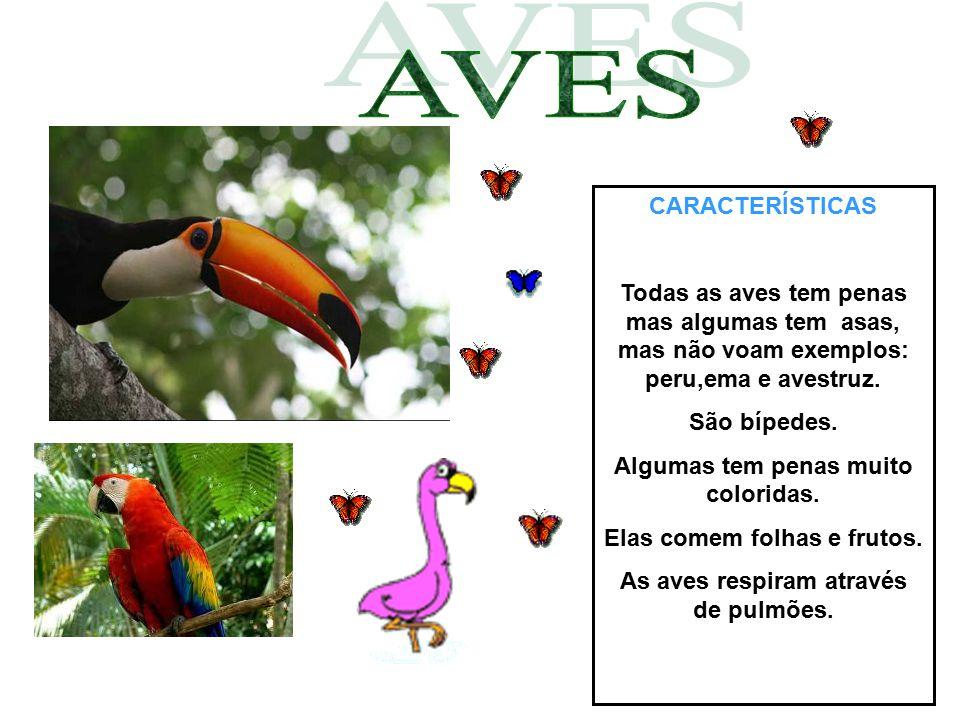CARACTERÍSTICAS Todas as aves tem penas mas algumas tem asas, mas não voam exemplos: peru,ema e avestruz. São bípedes. Algumas tem penas muito colorid
