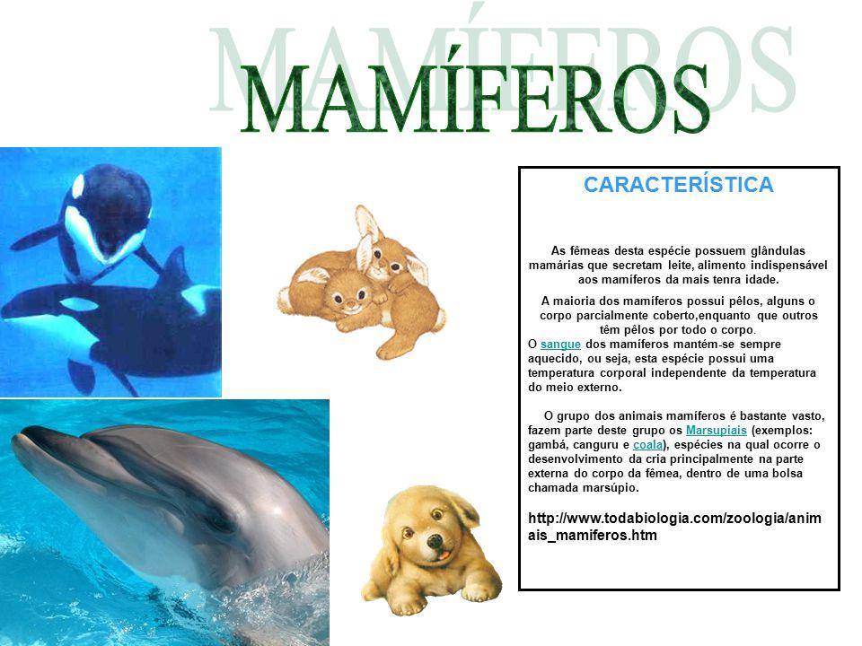 CARACTERÍSTICA As fêmeas desta espécie possuem glândulas mamárias que secretam leite, alimento indispensável aos mamíferos da mais tenra idade. A maio