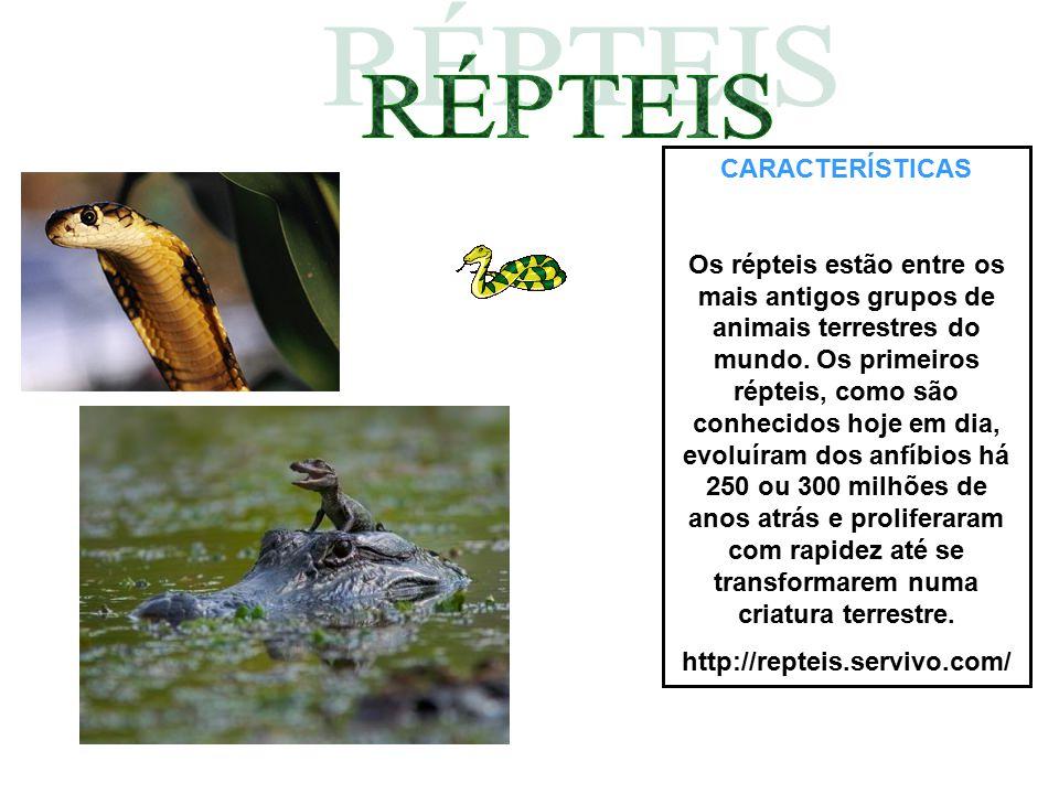 CARACTERÍSTICAS Os répteis estão entre os mais antigos grupos de animais terrestres do mundo. Os primeiros répteis, como são conhecidos hoje em dia, e