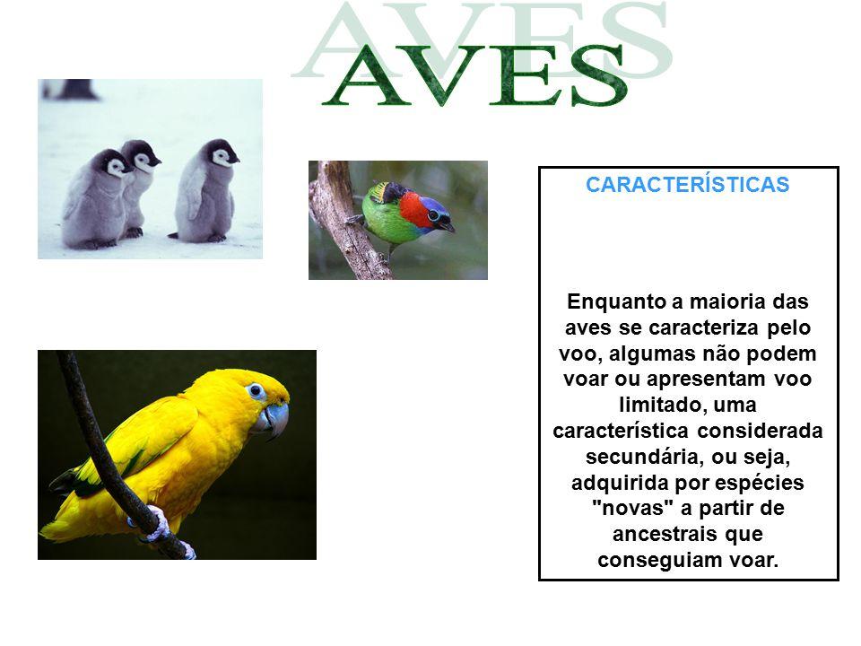 CARACTERÍSTICAS Enquanto a maioria das aves se caracteriza pelo voo, algumas não podem voar ou apresentam voo limitado, uma característica considerada