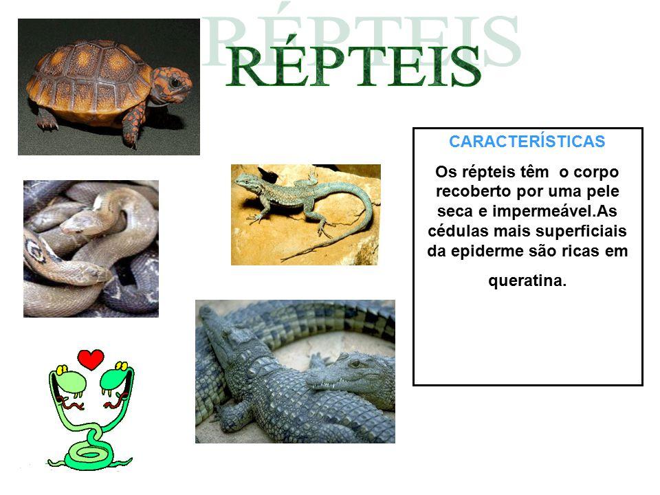 CARACTERÍSTICAS Os répteis têm o corpo recoberto por uma pele seca e impermeável.As cédulas mais superficiais da epiderme são ricas em queratina.