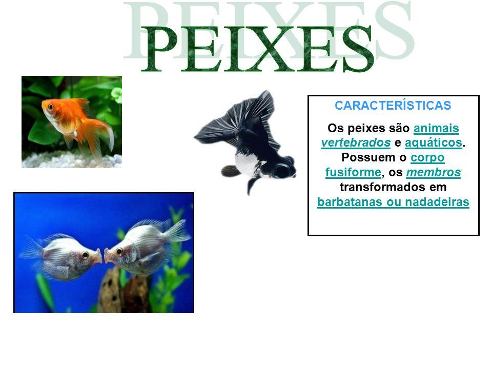 CARACTERÍSTICAS Os peixes são animais vertebrados e aquáticos. Possuem o corpo fusiforme, os membros transformados em barbatanas ou nadadeirasanimais