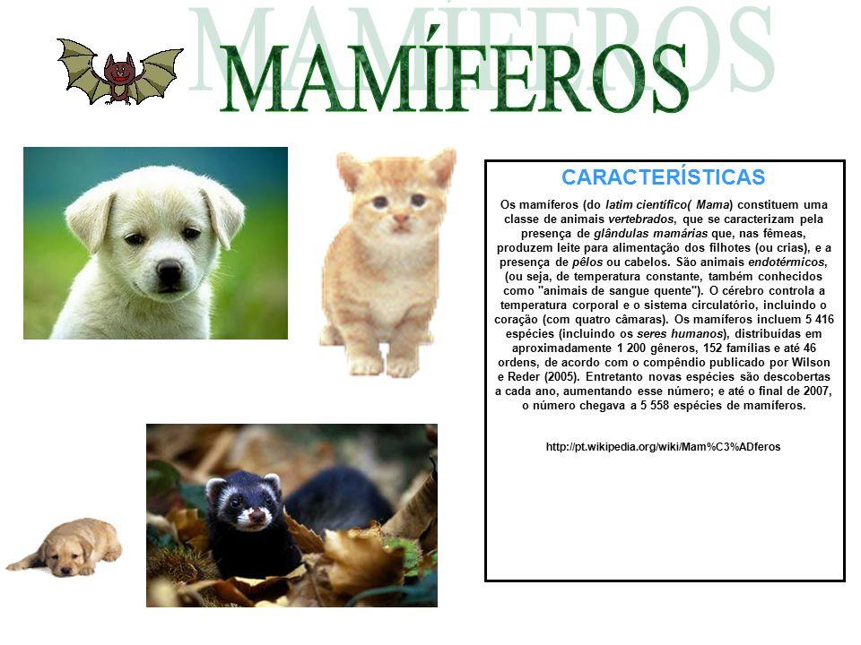 CARACTERÍSTICAS Os mamíferos (do latim científico( Mama) constituem uma classe de animais vertebrados, que se caracterizam pela presença de glândulas