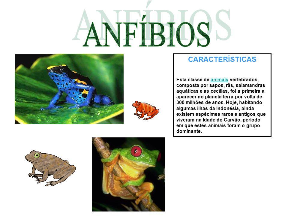 CARACTERÍSTICAS Esta classe de animais vertebrados, composta por sapos, rãs, salamandras aquáticas e as cecílias, foi a primeira a aparecer no planeta
