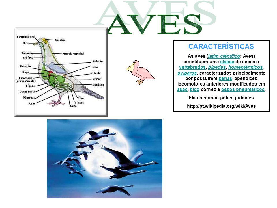 CARACTERÍSTICAS As aves (latim científico: Aves) constituem uma classe de animais vertebrados, bípedes, homeotérmicos, ovíparos, caracterizados princi