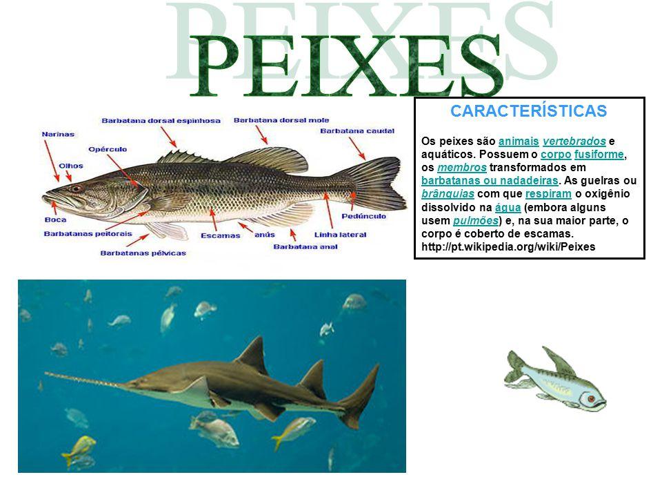 CARACTERÍSTICAS Os peixes são animais vertebrados e aquáticos. Possuem o corpo fusiforme, os membros transformados em barbatanas ou nadadeiras. As gue