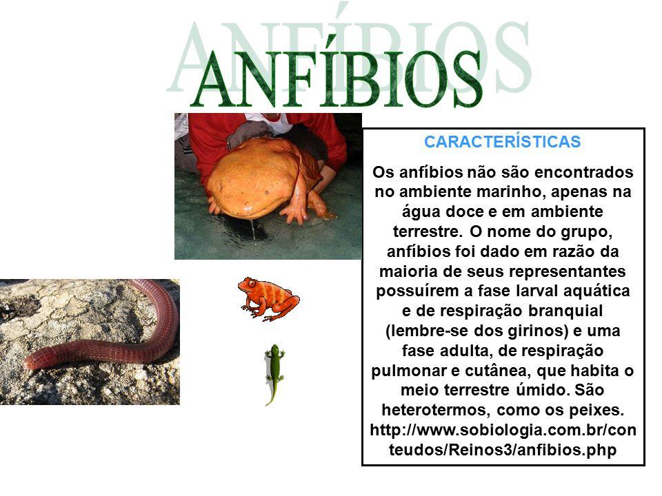 CARACTERÍSTICAS Os anfíbios não são encontrados no ambiente marinho, apenas na água doce e em ambiente terrestre. O nome do grupo, anfíbios foi dado e