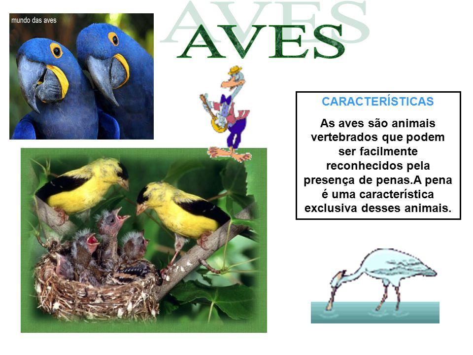 CARACTERÍSTICAS As aves são animais vertebrados que podem ser facilmente reconhecidos pela presença de penas.A pena é uma característica exclusiva des