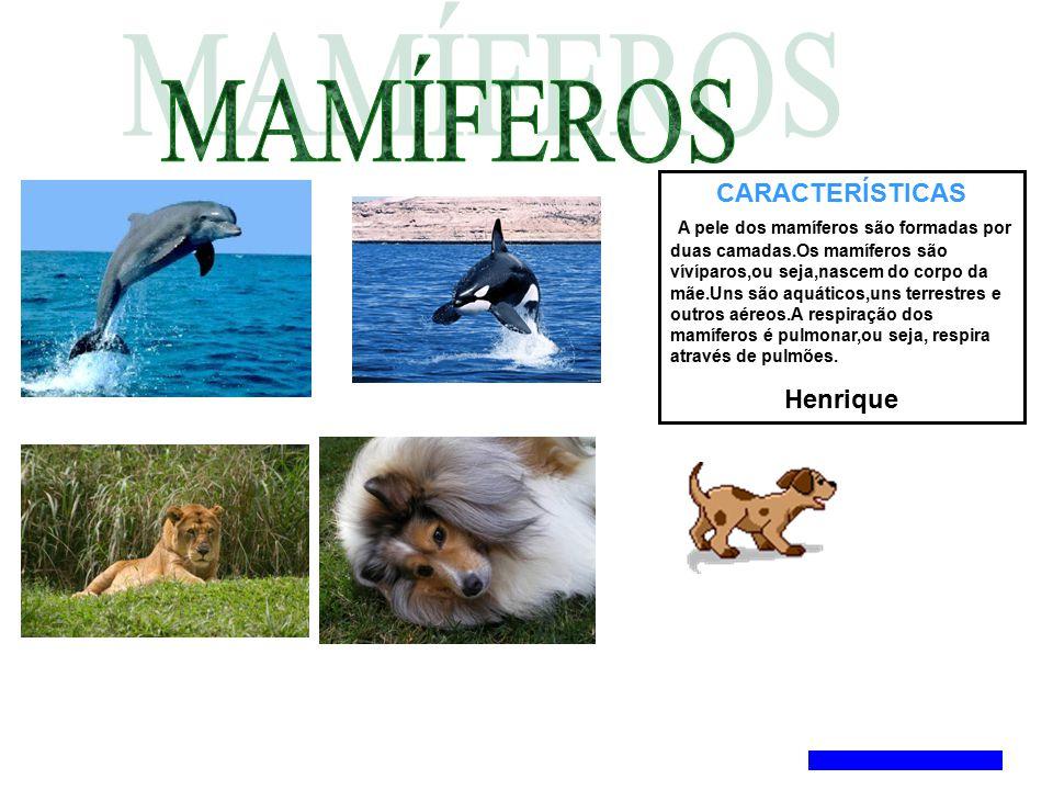 CARACTERÍSTICAS A pele dos mamíferos são formadas por duas camadas.Os mamíferos são vívíparos,ou seja,nascem do corpo da mãe.Uns são aquáticos,uns ter
