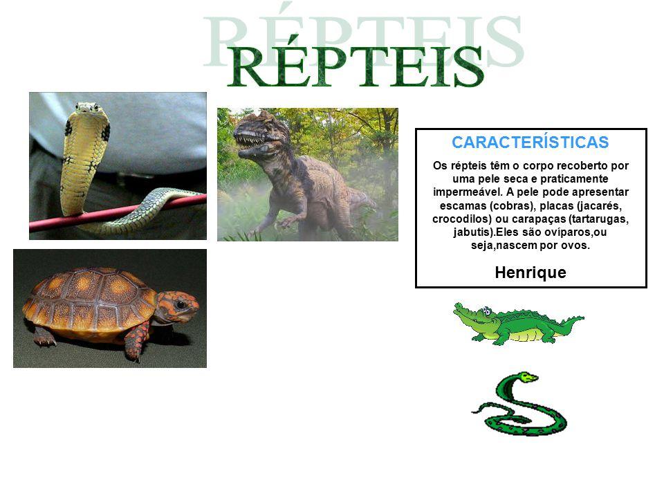 CARACTERÍSTICAS Os répteis têm o corpo recoberto por uma pele seca e praticamente impermeável. A pele pode apresentar escamas (cobras), placas (jacaré