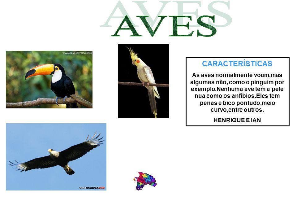 CARACTERÍSTICAS As aves normalmente voam,mas algumas não, como o pinguim por exemplo.Nenhuma ave tem a pele nua como os anfíbios.Eles tem penas e bico