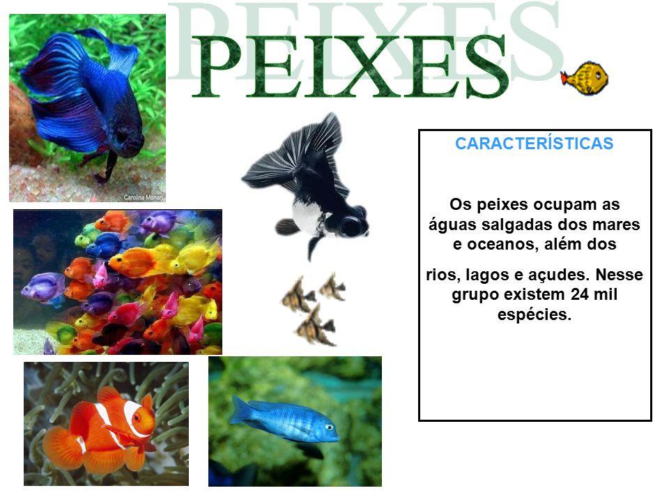 CARACTERÍSTICAS Os peixes ocupam as águas salgadas dos mares e oceanos, além dos rios, lagos e açudes. Nesse grupo existem 24 mil espécies.
