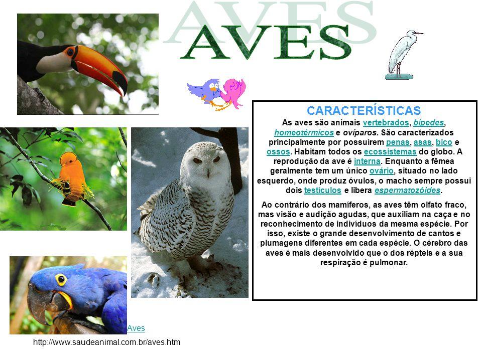 CARACTERÍSTICAS As aves são animais vertebrados, bípedes, homeotérmicos e ovíparos. São caracterizados principalmente por possuírem penas, asas, bico